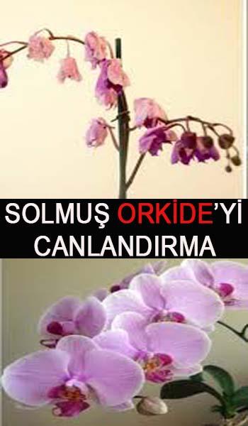 orkide çiçeği evde bakımı