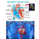Kalbin görevi nedir