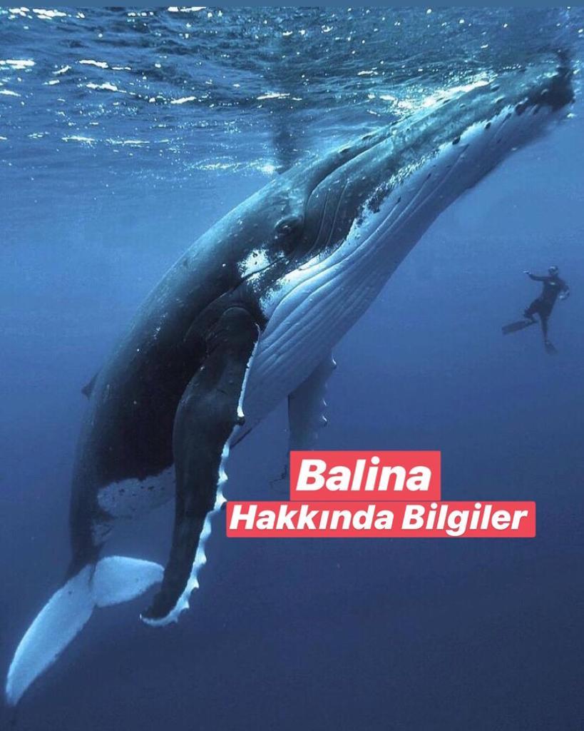Balinalar hakkında Bilgiler