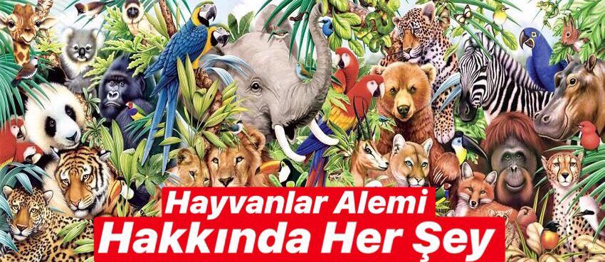 Hayvanlar Hakkında Her Şey Burada