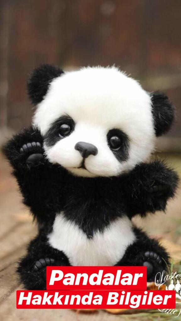 Pandalar Hakkında Bilgiler