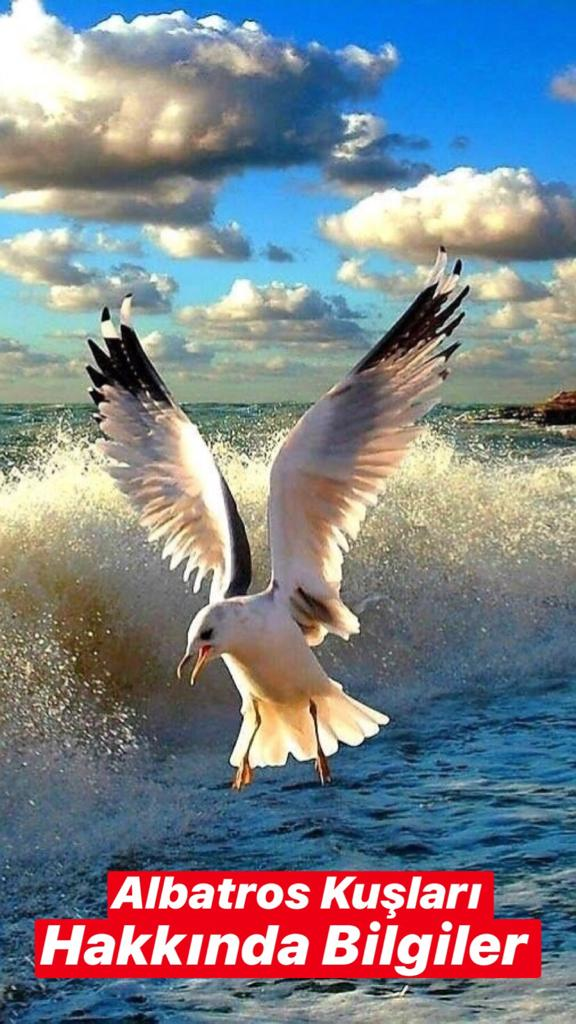 Albatros Kuşları Hakkında Bilgiler
