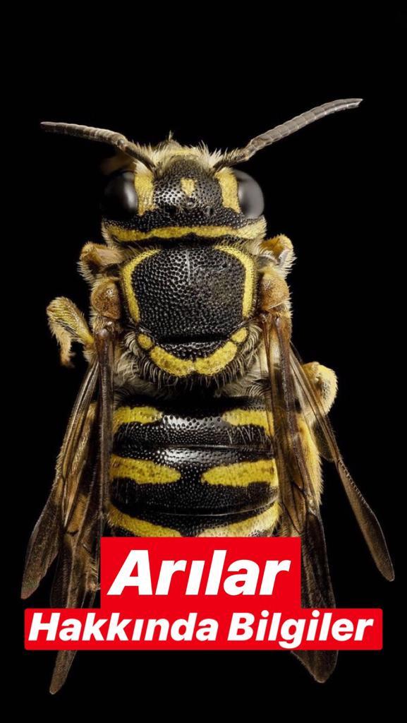 Arılar Hakkında Bilgiler