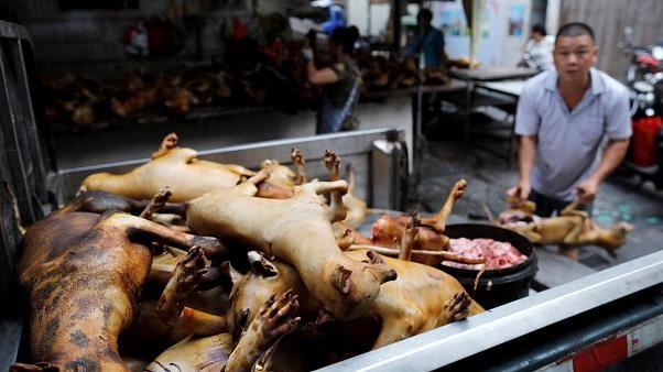 Çinde Köpek Festivali Nerede Kutlanıyor