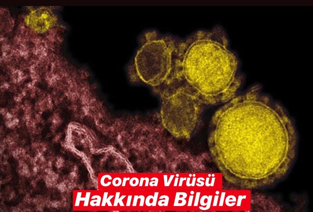 Corona Virüsü Hakkında Bilgiler, Corona Virüsü Nedir, Corona Virüsü Nasıl Bulaşır