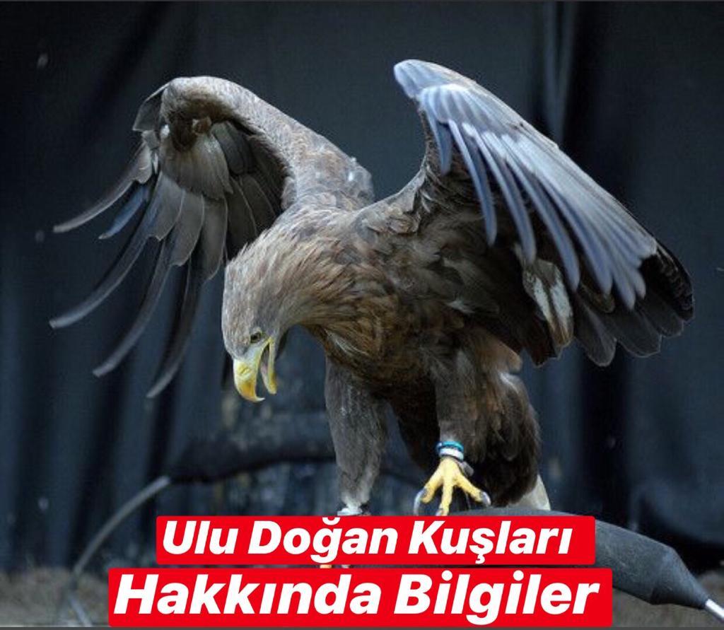 Ulu Doğan Kuşları Hakkında Bilgiler