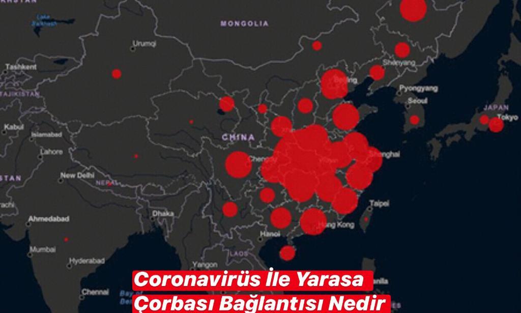 Coronavirüs Yarasa Çorbası Bağlantısı Nedir ?