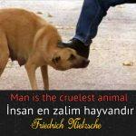 Hayvanlara eziyet edenlere ingilizce Türkçe Çevirili anlamlı sözler