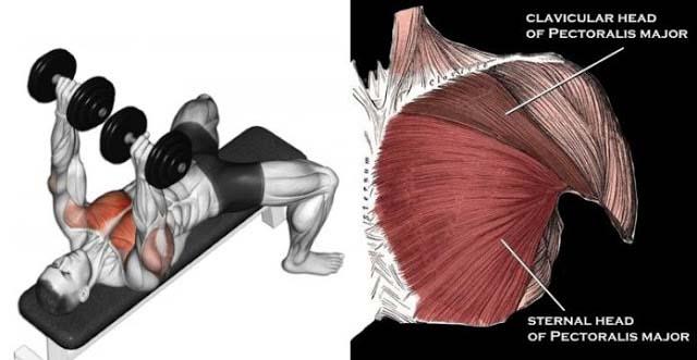 göğüs egzersizleri