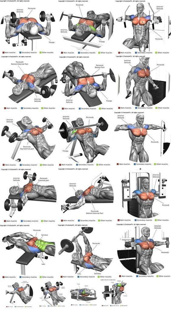 göğüs hareketeleri fitness
