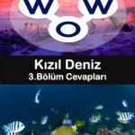 wow kizil deniz 3.bölüm cevapları