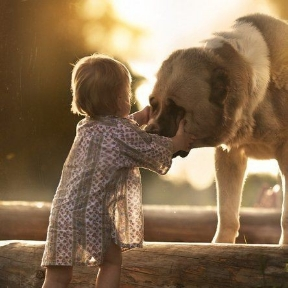Hayvan sevgisi köpek sevgisi