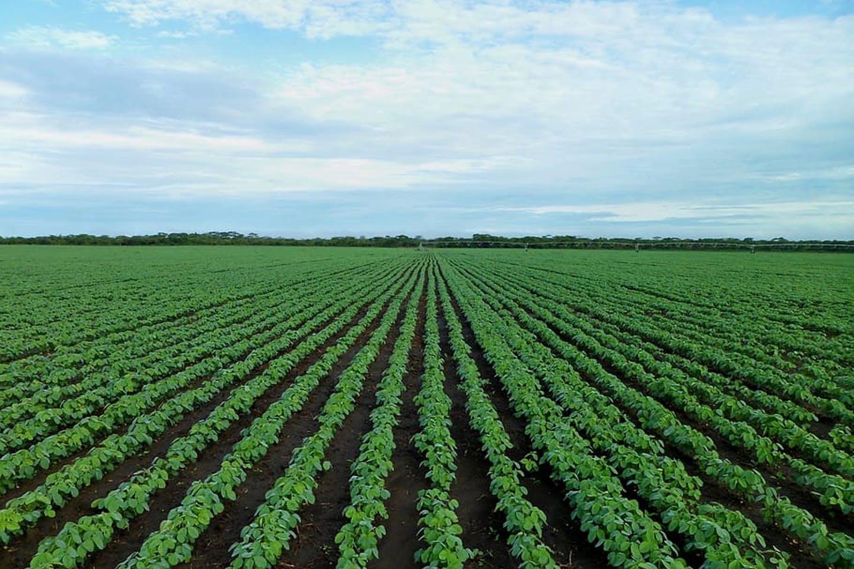 Tarımda Kullanılan Hormonlar