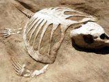 Fosil Nasıl Oluşur?