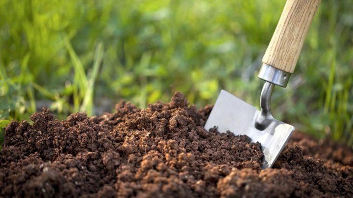 İntrozonal Toprak Nedir, İntrozonal Toprak Özellikleri Nelerdir?