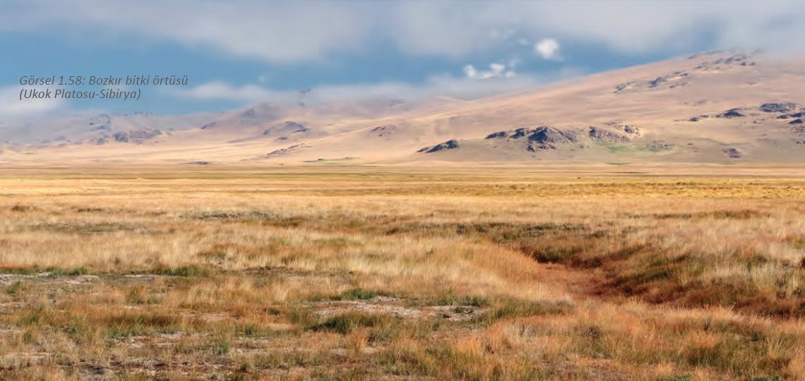 Tundra İklimi Nedir, Tundra İklimi Özellikleri Nelerdir?