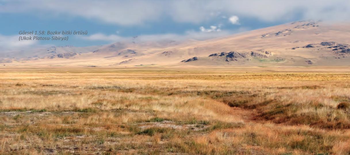 Tundra İklimi Özellikleri Nelerdir?