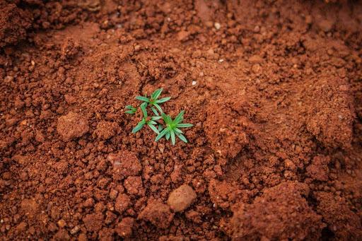Zonal Toprak Nedir, Zonal Toprak Özellikleri Nelerdir?