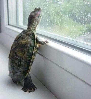 Kaplumbağaya Hikayesi