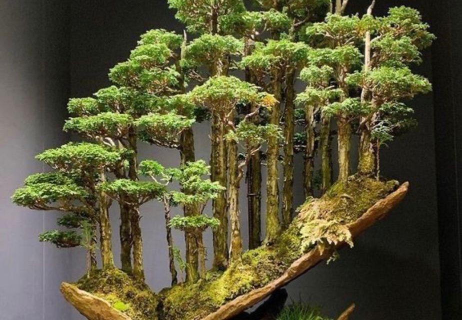Ağaç Yaşken Eğilir İle İlgili Kompozisyon Örnekleri