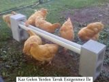 Kaz Gelen Yerden Tavuk Esirgenmez İle İlgili Kompozisyon Örnekleri Nelerdir?